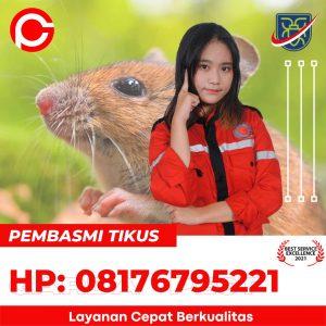 cara memancing tikus keluar dari persembunyiannya di Sinarancang Cirebon
