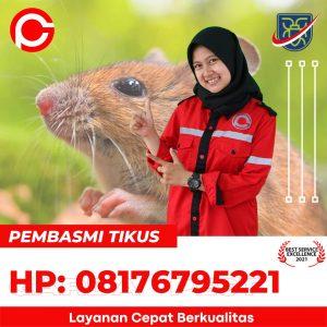 cara membunuh tikus yang baik di Setupatok Cirebon
