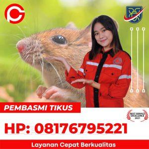 cara basmi tikus rumah di Kalimekar Cirebon